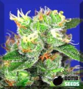 Medi Bomb #2 buy uk feminised hybrid cannabis seeds online